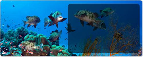 壁纸 海底 海底世界 海洋馆 水族馆 500_200