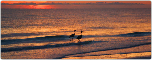 Hotels PayPal in Marco Island (FL)  United States