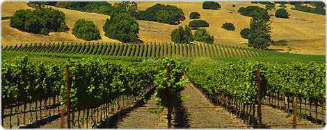 Hotels PayPal in Napa (CA) California United States