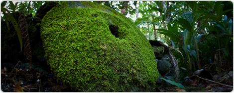 Yap stone money with moss growing on it - Courtesy of cdn0.agoda.net