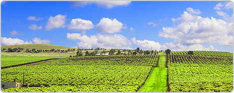 Hotels PayPal in Clare Valley South Australia Australia